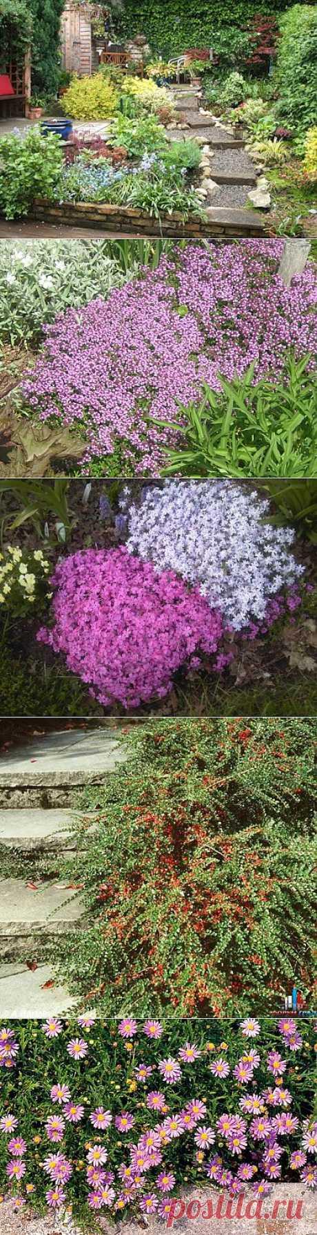 (+1) - Растения для дорожек и ступеней | 6 соток