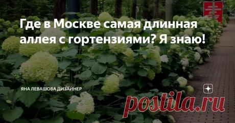 Где в Москве самая длинная аллея с гортензиями? Я знаю!