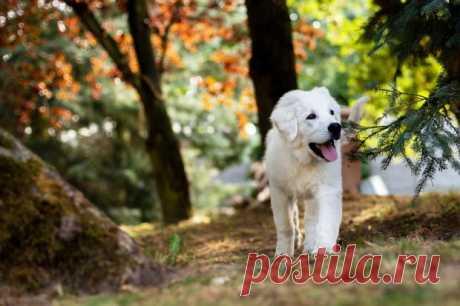 Милое видео про животных: знакомство щенка и козленка растрогало пользователей сети - Досуг - Животные на Joinfo.ua