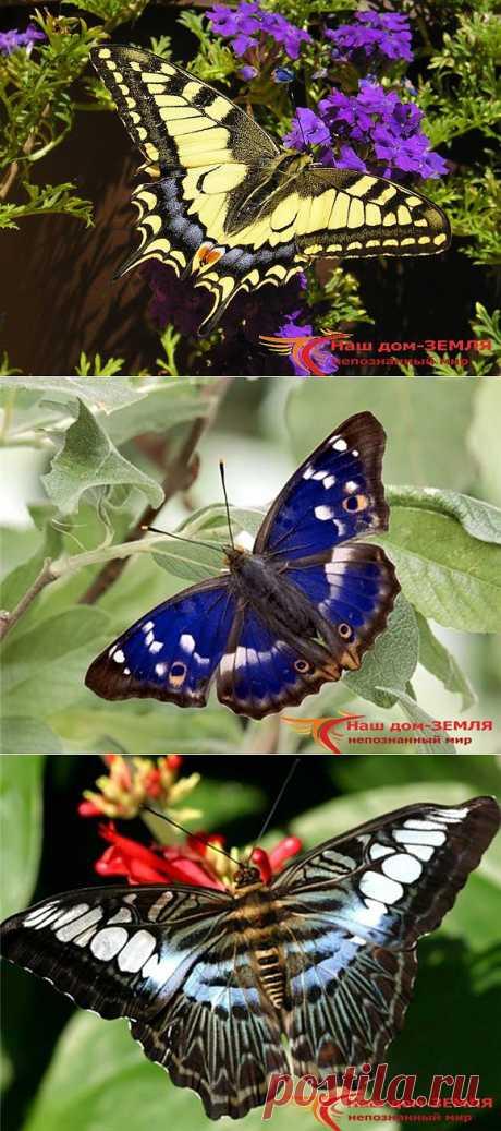 Интересные факты о бабочках.