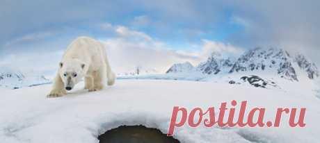Под полуночным солнцем рядом с полыньей в арктическом льду белый медведь наткнулся на необычные предметы: датчик движения и камеру Аудуна Рикардсена. Спустя год Аудун отправился в экспедицию, чтобы вернуть из плена воды и льда то, что ему принадлежит – редкие снимки.