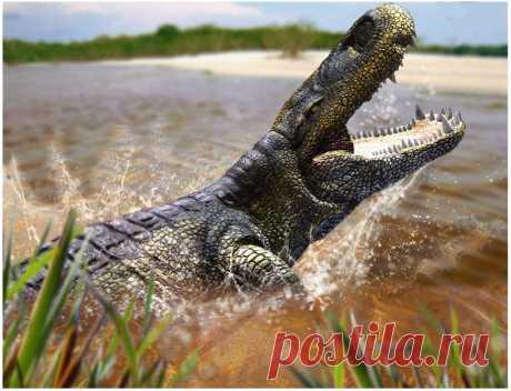 Пурусзавр: Большим копытным нужен большой хищник. 12 тонн крокодила на максималках