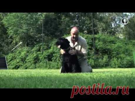 El planeta de los perros. Rizenshnautser - YouTube