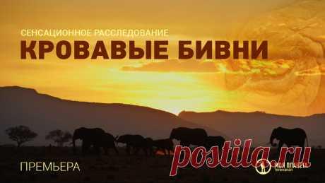 El canal de televisión «Mi Planeta» mostrará la película-investigación sensacional de Sergey Yastrzhembsky | a la Novedad | Alrededor del mundo
