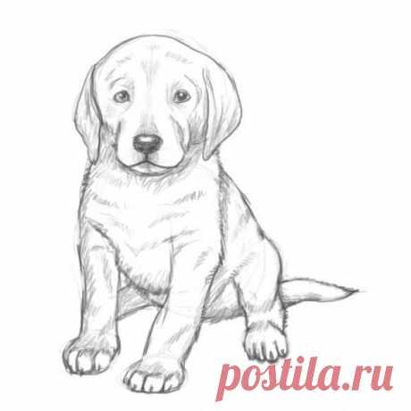 Учимся рисовать щенка поэтапно -
