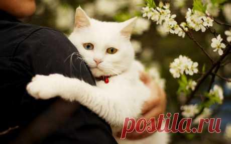 Точнейшее определение любви от Макса Фрая: «Маленькая глупая белая кошка знает, что такое любовь. Любовь — это лежать на неудобных скользких коленях неудобного скользкого, постоянно шевелящегося любимого существа, сползать с них каждые несколько минут, но не выпускать отросшие после стрижки когти, не цепляться, а шмякаться на пол, вздыхать, запрыгивать обратно на скользкие неудобные колени, сворачиваться клубком и снова сползать на пол, но не выпускать когти, не цепляться, падать, вздыхать и…