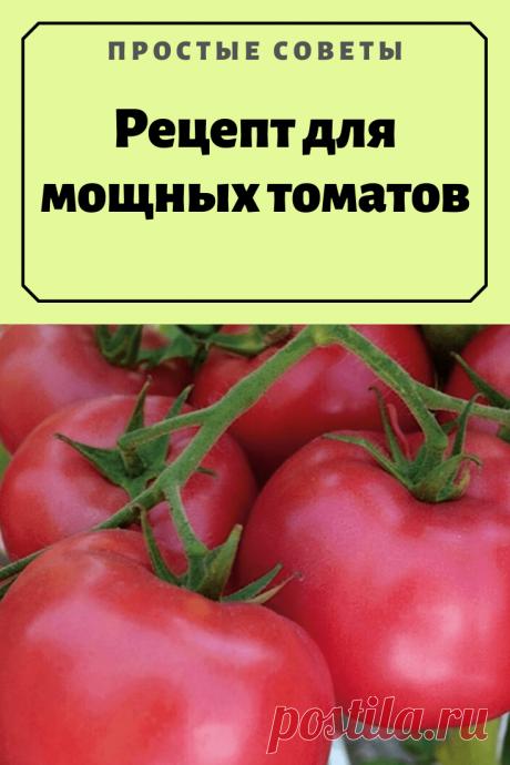 Рецепт для мощных томатов — Простые советы