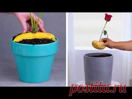 12 Indoor Gardening Hacks That Make You Throw Your Hands up and Sprout!