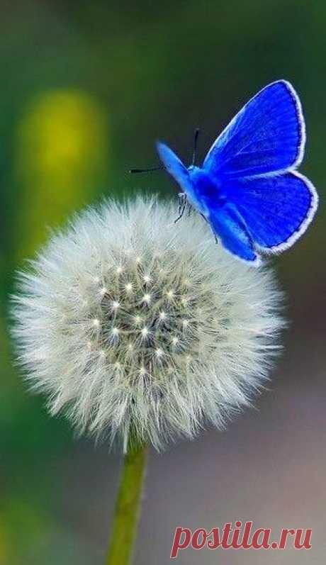 Если человек действительно чего-то захочет, то вся Вселенная будет способствовать тому, чтобы его желание сбылось. Пауло Коэльо
