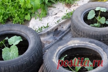 Выращиваю огурцы по новой технологии в автомобильных шинах. Лучшие способы, которые дают великолепный урожай | 1001 безумная идея для дома/дачи | Яндекс Дзен