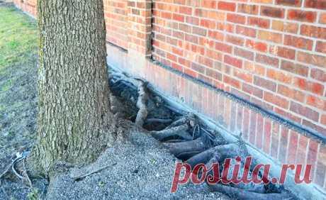 Какие деревья способны разрушить дом: не сажаем во дворе