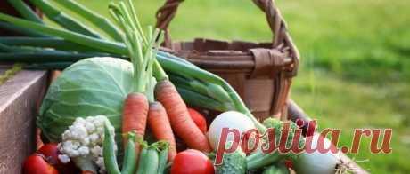 Лунный календарь на июль 2020 года садовода и огородника Лунный посевной календарь на июль 2020 года садовода и огородника. Когда сажать овощи в теплицу и какие цветы можно посадить летом.