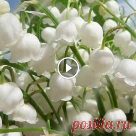 Для тех, кто ждёт весну! Шикарная музыка Поля Мориа — Love story