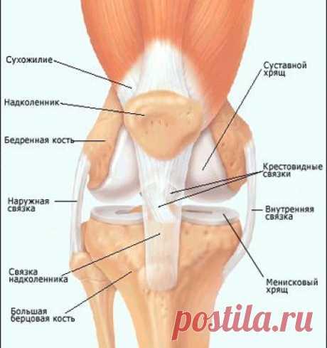 Болезни коленного сустава: список, признаки и причины