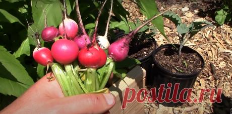 Восемь способов выращивать много еды на маленьком участке   Говорит Ира   Яндекс Дзен