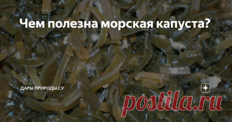 Чем полезна морская капуста? Полезные свойства ламинарии для организма