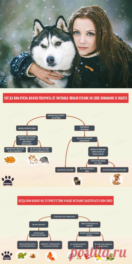 Как понять нужно ли вам заводить собаку или кота » Notagram.ru
