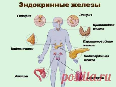 Упражнения для эндокринной системы