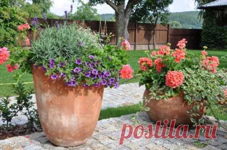 Как ухаживать за цветами в горшках и кашпо – 5 правил для жаркого лета