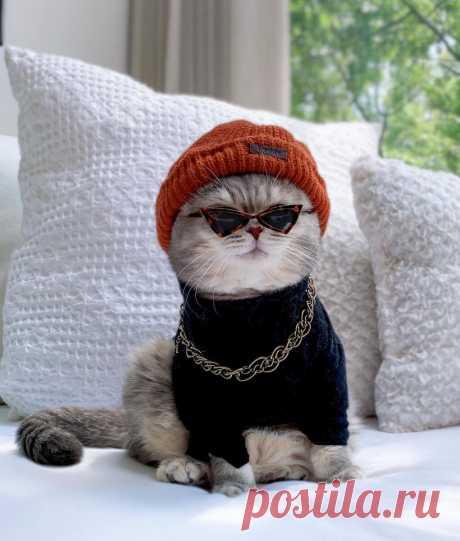 «Этот котик в вязаных вещах украл моё сердечко. И ваше тоже украдёт»: вязаные идеи для домашних питомцев и много фото | Уникальная мастерская Chichimova | Яндекс Дзен