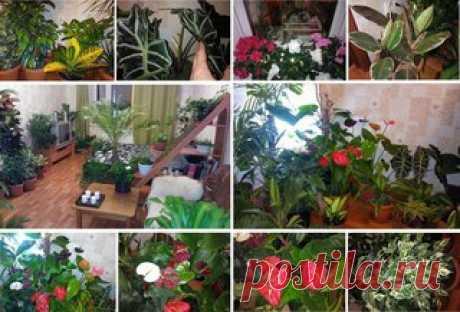 5 НАТУРАЛЬНЫХ УДОБРЕНИЙ ДЛЯ ДОМАШНИХ ЦВЕТОВ.   Моя бабушка Лидия Михайловна – заядлый цветовод. Все подруги в голос твердят – «Лида ты не в квартире живешь, а в ботаническом саду!».  Спросила я как то: – «Бабуля какими чудо-удобрениями поливаешь цветочки, что они у тебя так растут?»  На что бабушка мне ответила: - «Что ты милая, какие чудо-удобрения, никакой покупной химии. Все проще простого. Есть несколько продуктов из которых выходят замечательные удобрения:  1.) Подкор...