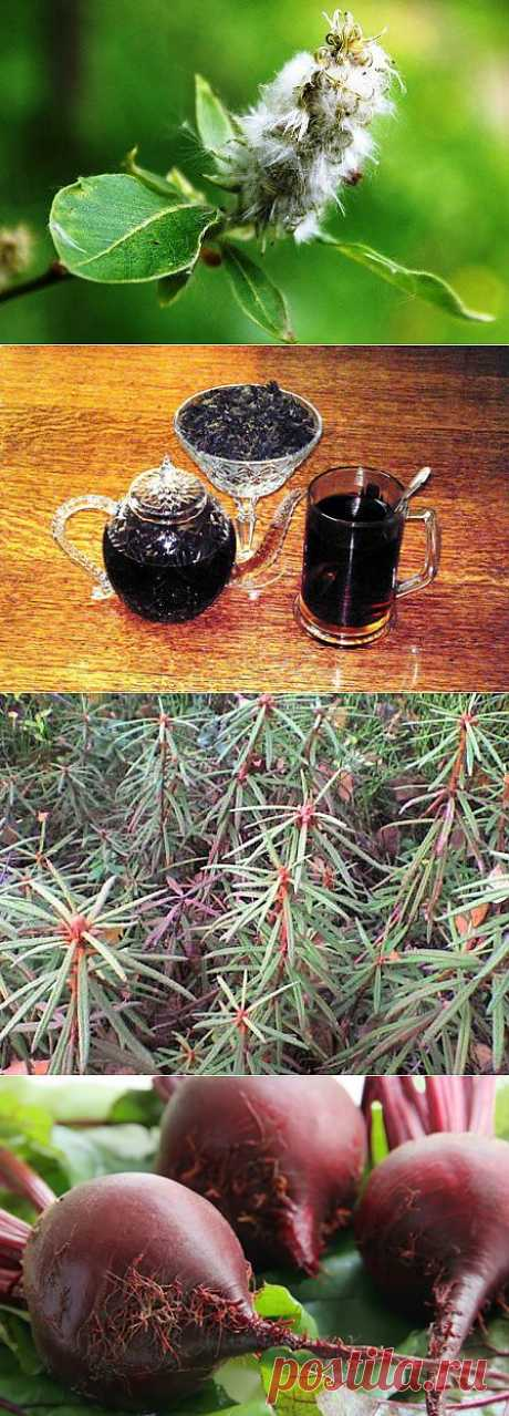Худеть не сложно - главное захотеть - Копорский чай - здоровье России!