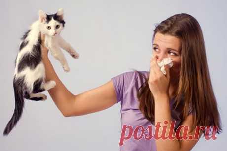 Как избавиться от запаха кота в квартире и как вывести пятна кошачьей мочи с пола, мягкой мебели, обуви