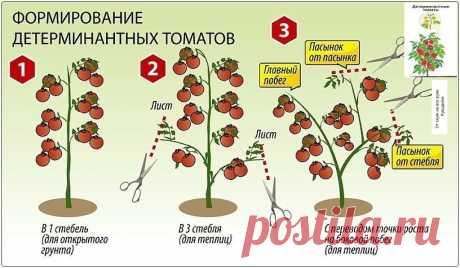 Шпаргалка для начинающих дачников. Как формировать томатные кусты. | От скуки на все руки. | Яндекс Дзен
