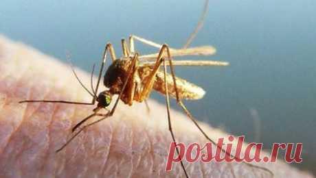 Как отпугнуть комаров, чего они боятся С приближением лета дачники и любители природы задумываются о действенных средствах борьбы с комарами. Химические ...