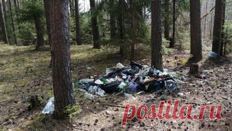 110 км от города. Кучи мусора у реки, деревнях и в лесах | Хозяйство Воронова | Яндекс Дзен