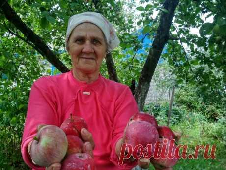 Яблони в саду: благодарность за щедрые дары | Дом с огородом в пригороде | Яндекс Дзен Лично у меня осень ассоциируется с ароматными плодами яблок. Наш сад успел порадовать семью мясистым белым наливом, малиновкой, теперь на постепенно оголяющихся ветвях пестрят поздние, «зимние» сорта. В погребе ждут своего часа повидло, варенья и сок, чтобы и зимой напомнить нам о лете.