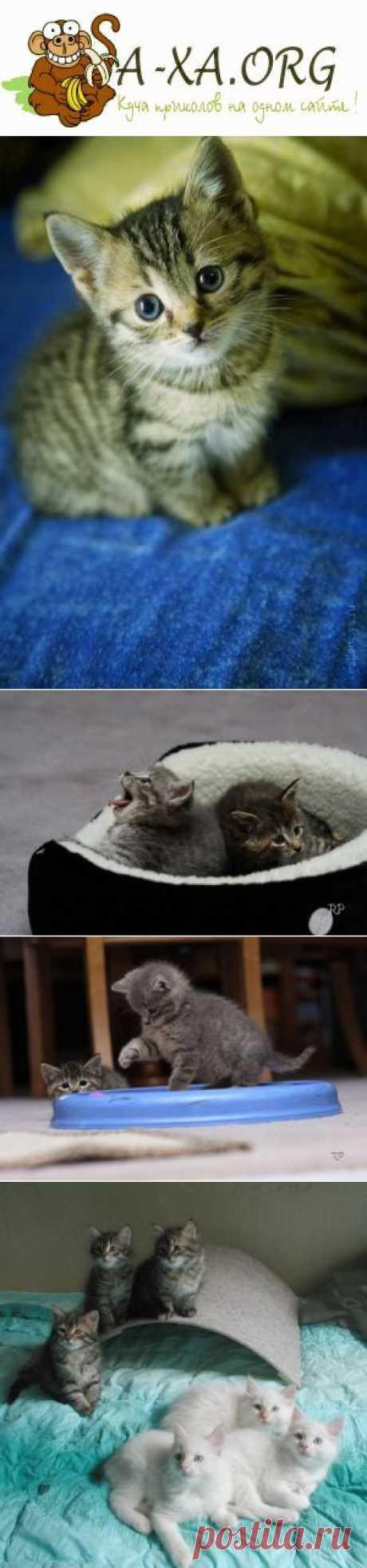 Котяшки!