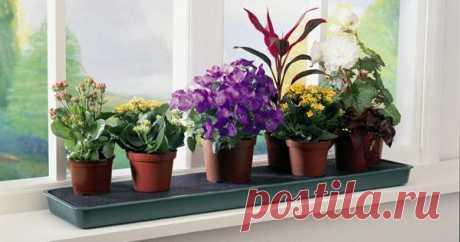Растения-пылесосы Такие растения поглощают из воздуха формальдегид и фенол, выделяющиеся из новой мебели, уничтожают микробы: алоэ древовидное, хлорофитум, филодендрон лазающий. Спатифиллум (Spathiphyllum) отличается способностью поглощать углекислый газ и пары формальдегида. Он …