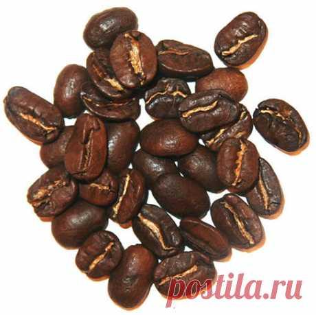 Арабика и робуста отличие и какое кофе лучше выбрать