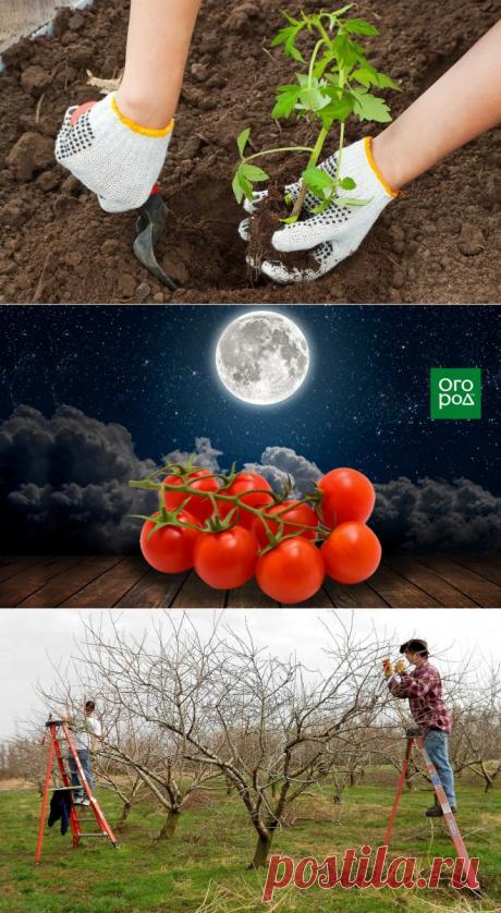 Уход за растениями | Анна Головачева | Фотографии и советы опытных дачников на Постиле