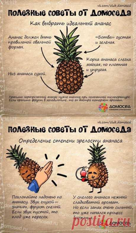 Как выбрать ананас - полезные советы от домоседа
