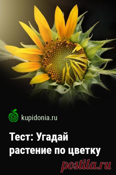 Тест: Угадай растение по цветку. Тест о цветущих растениях с картинками, который проверит ваши знания и визуальную память.