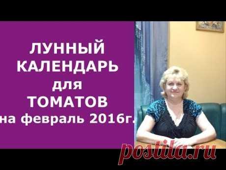 Лунный календарь замачивания и посева томатов (помидор) с пикировкой и без пикировки на февраль 2016