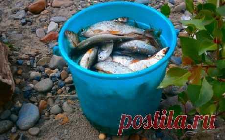 Спасение от бесклевья — глазировка и особая тактика ловли Опытные рыболовы довольно часто летом, когда вода прогревается, наблюдают следующую картину: поплавок, в буквальном смысле пляшет, но поклевка не