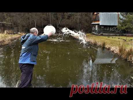 Весеннее известкование пруда с рыбой на своём участке - YouTube