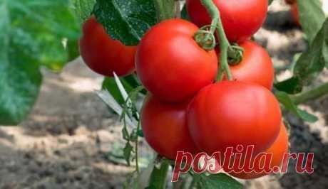 Чем опрыскать помидоры для завязи: народные средства Почему уменьшаются завязи томатов Перед тем, как начать разбираться со средствами для подкормки ваших растений, необходимо разобраться, чего именно им не хватает. Как правило, чтобы понять это, нужно ...
