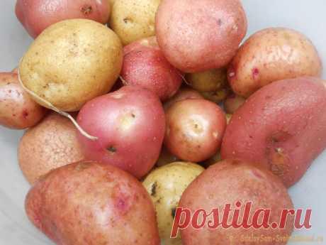 Четыре эффективных приема для повышения урожайности картофеля Выращенный на собственном дачном участке картофель всегда вкуснее и полезнее, чем приобретенный в супермаркете, особенно, если при культивировании не использовались пестициды и синтетические удобрения. Поэтому многие огородники ежегодно отводят под культуру несколько грядок, и даже целую плантацию,