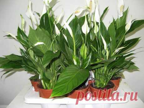 Полейте растения этим средством и они оживут через пару дней! — Лепрекон