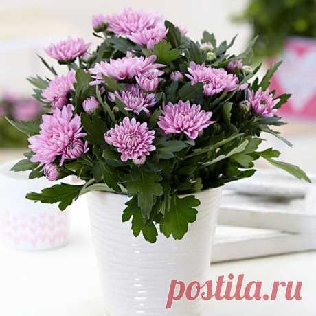 Домашние цветы, которые приносят в дом любовь