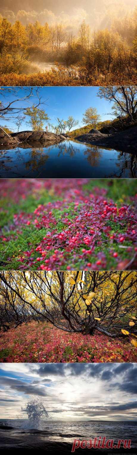 >> Золотая осень на Кольском полуострове | ФОТО НОВОСТИ