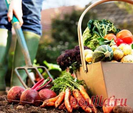 Осенние работы в саду и огороде: что нужно сделать