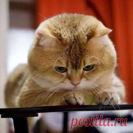 Прикольные фотографии котиков. Кити кити юмор. Подборка №milayaya-cat-31291005072020 . Милая Я