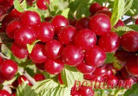 Секреты войлочной вишни