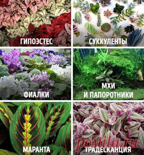 Как сделать сказочный мини-сад : Полезные советы : Дом : Subscribe.Ru