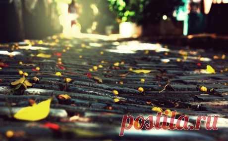 - А завтра наступит Октябрь...  ...И будет Красиво кружиться оторванный лист...  ...Он в ветре прохладном немного продрог и озяб...  Но что тут поделать?!!  ...Природы осенней Каприз...